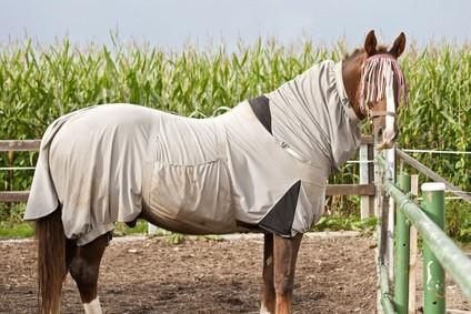 sommerekzem-pferd-blog