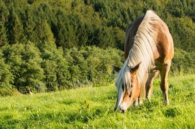 blog-pferd-anweiden